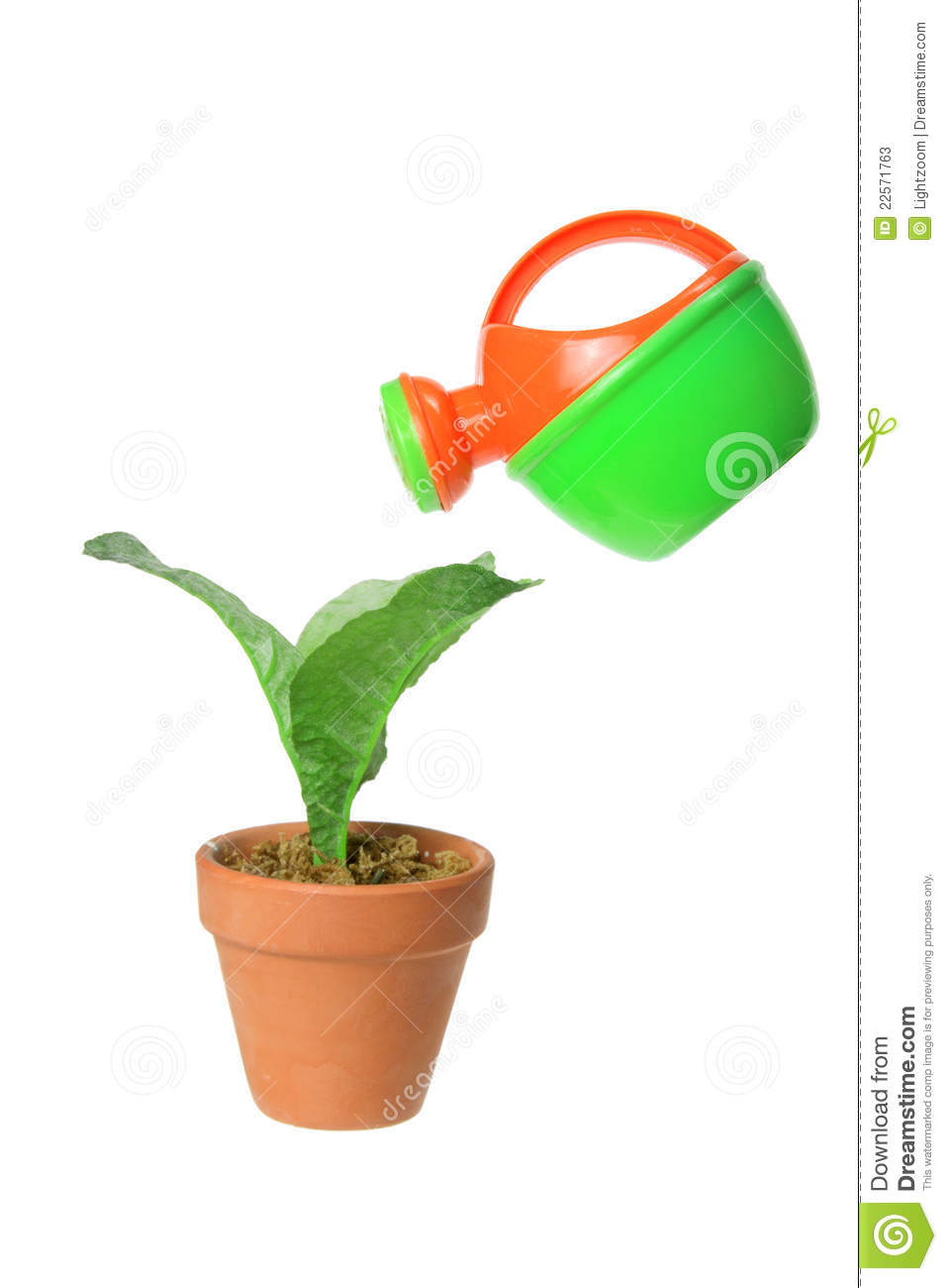 Watering Can And Pot Plant Stock Photos Image 22571763