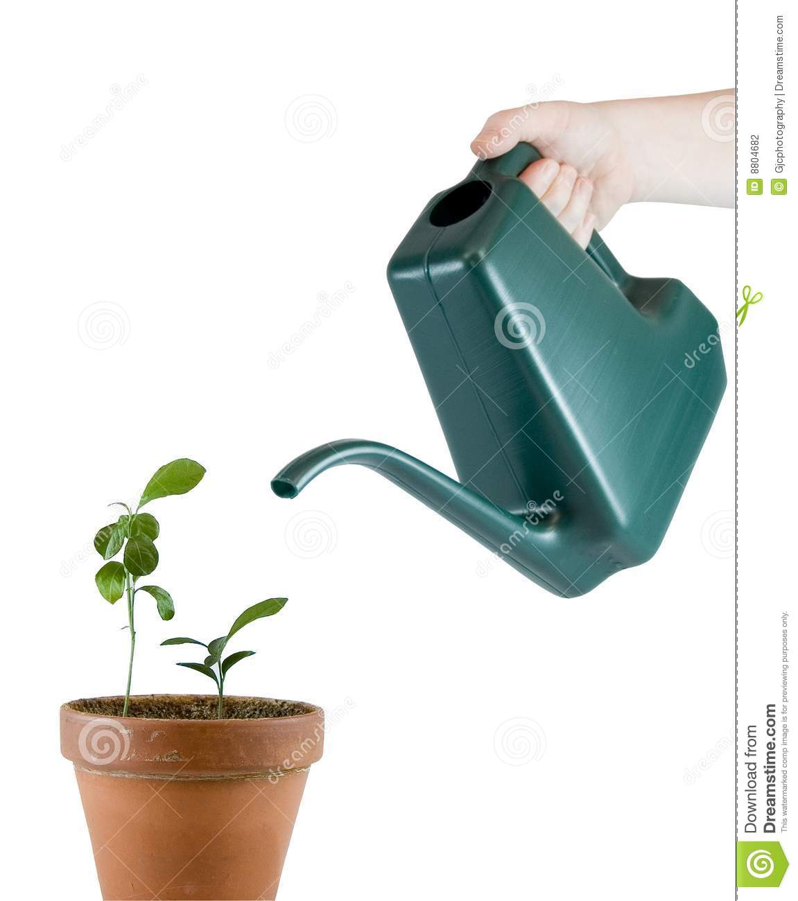 Watering Can Pouring On Plants Stock Photo Image Of Leaf