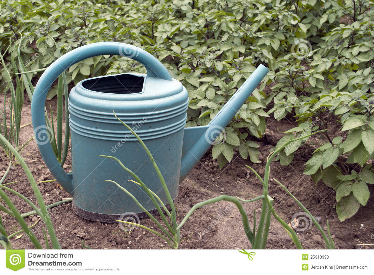 Watering can in vegetable garden royalty free stock photos for Watering vegetable garden