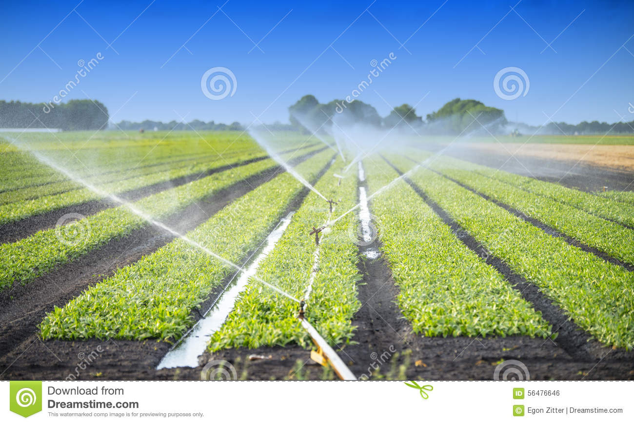 Watering Crops Stock Photo - Image: 56476646