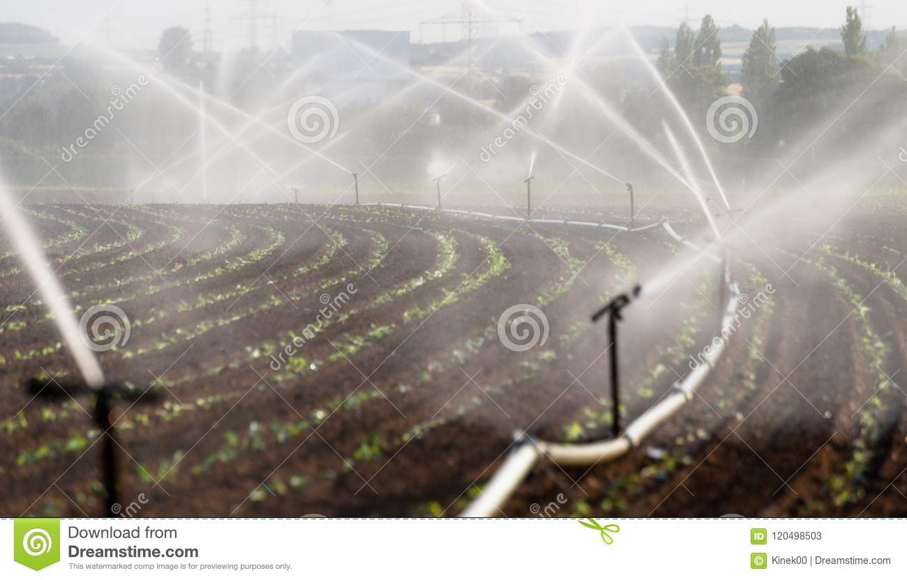Watering crops in western Germany with Irrigation system using sprinklers in a cultivated field.
