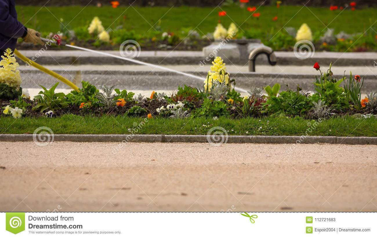 Watering a flower lawn in the park