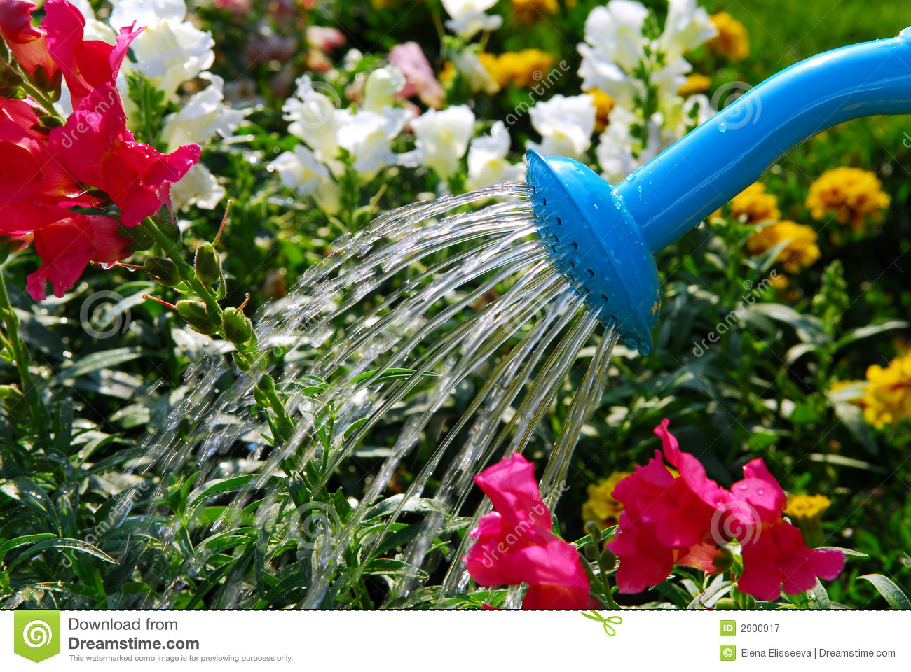 Watering Flowers Royalty Free Stock Photography - Image: 2900917