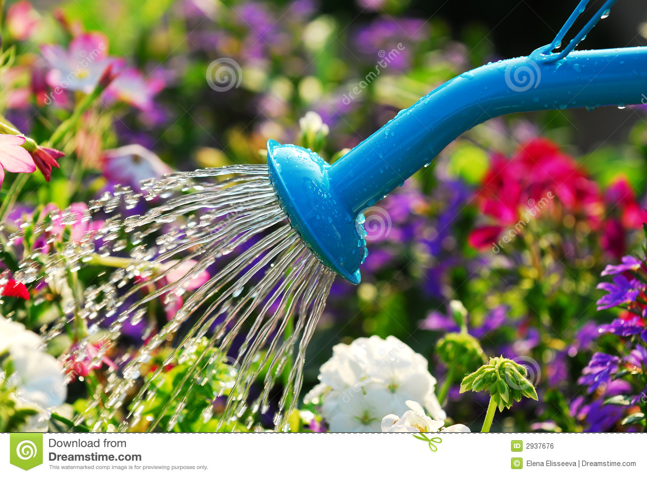 Watering Flowers Royalty Free Stock Image Image