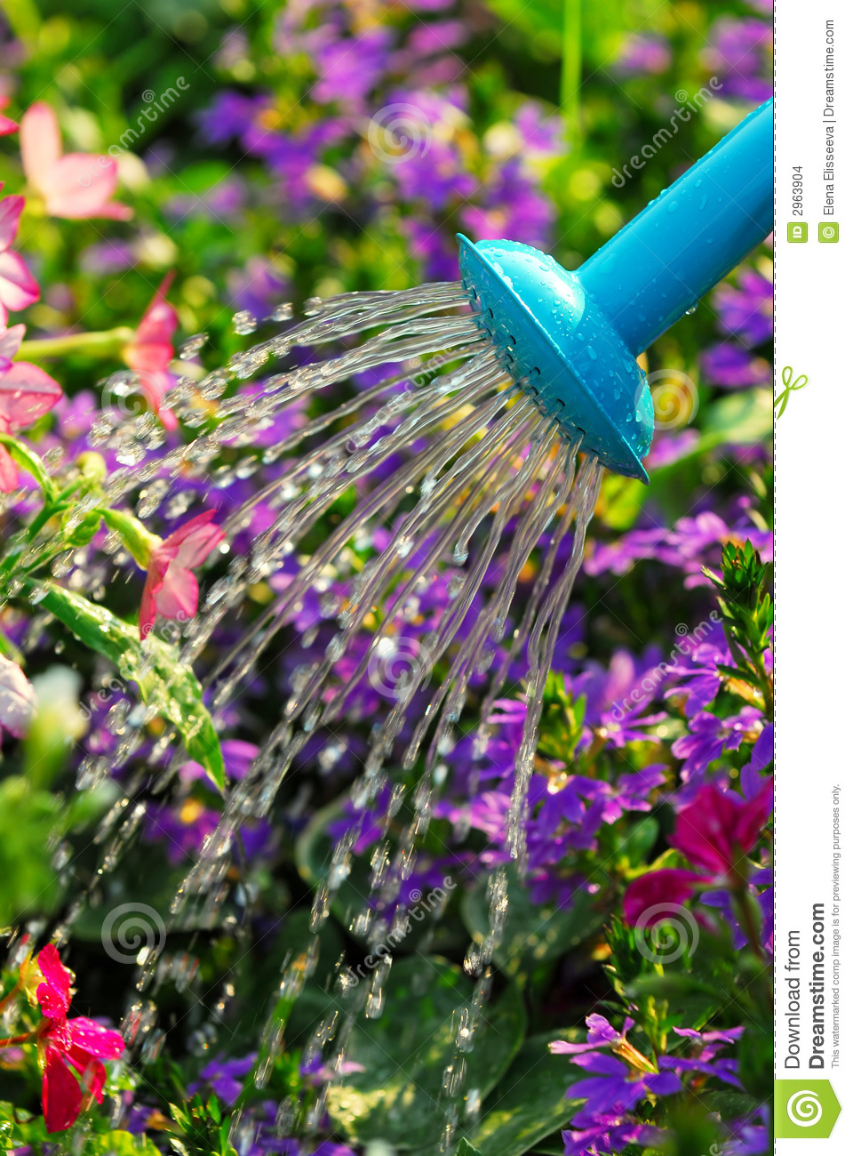 Displaying 20> Images For - Watering Flowers...
