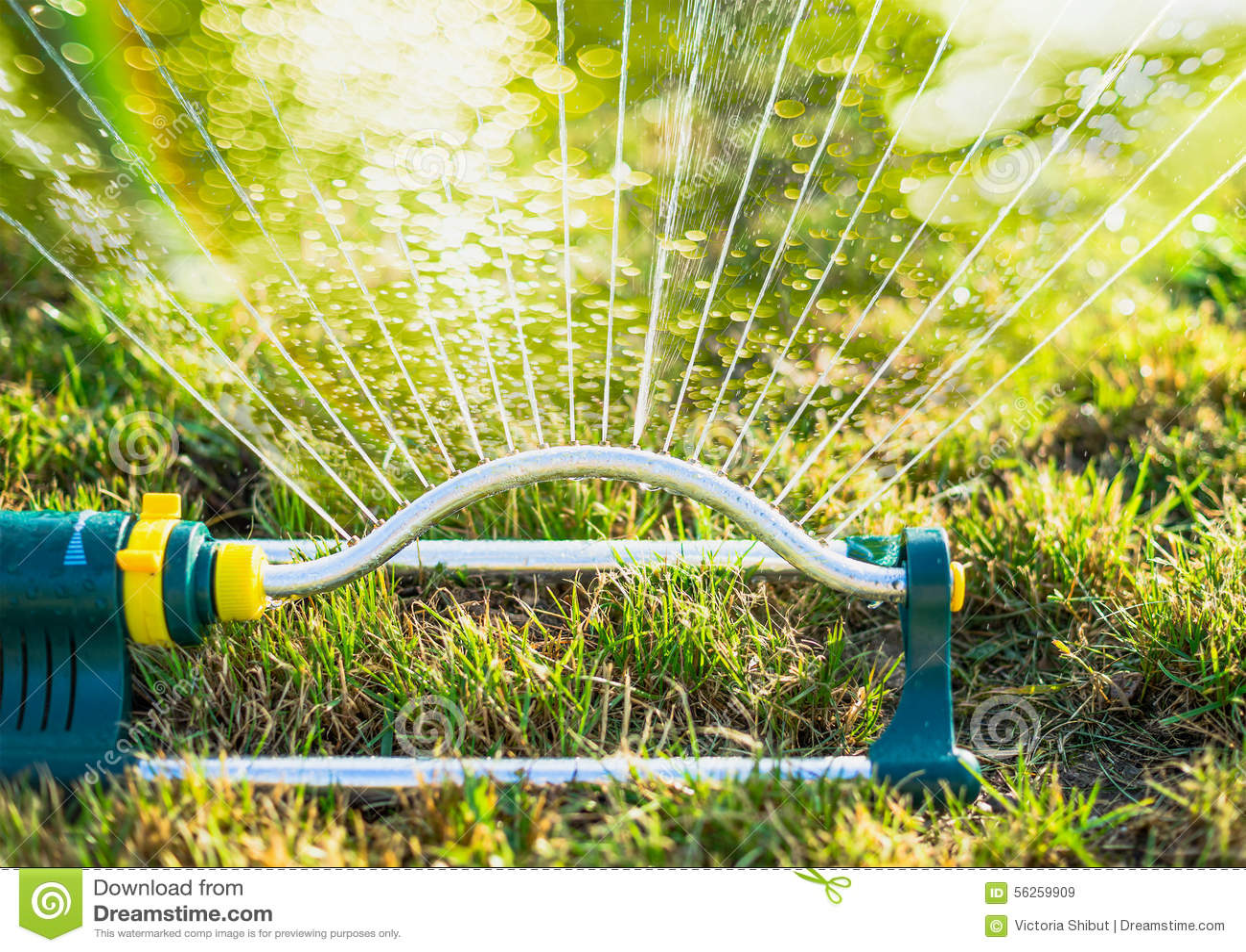 Watering in summer garden with sprinkler on grass lawn background