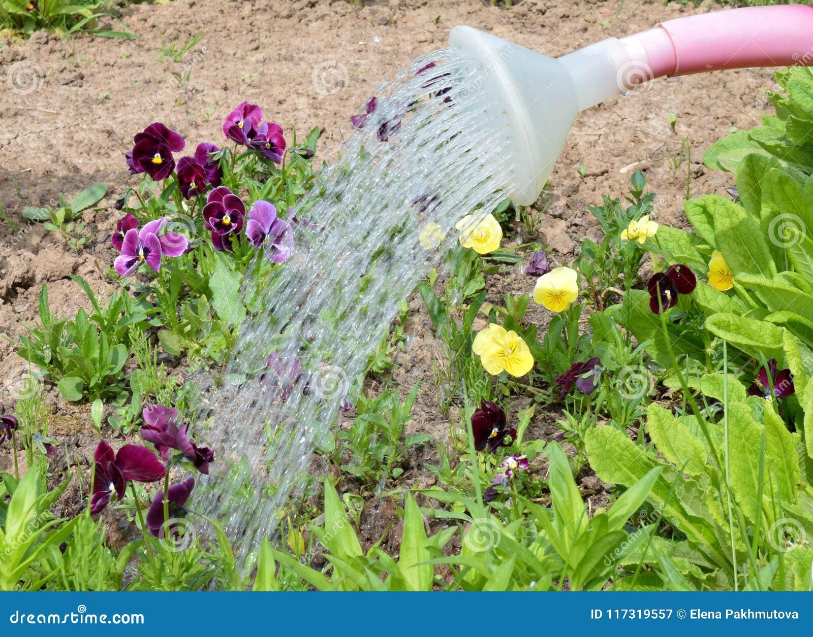 Garden Gardening Plant Flower Nature Watering Green Spring