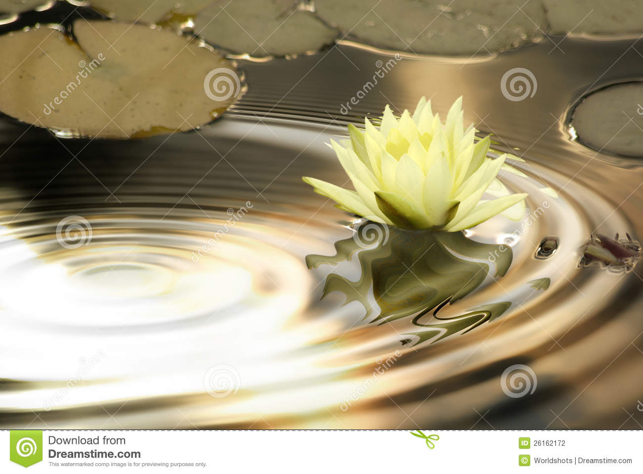 Waterlily ripples