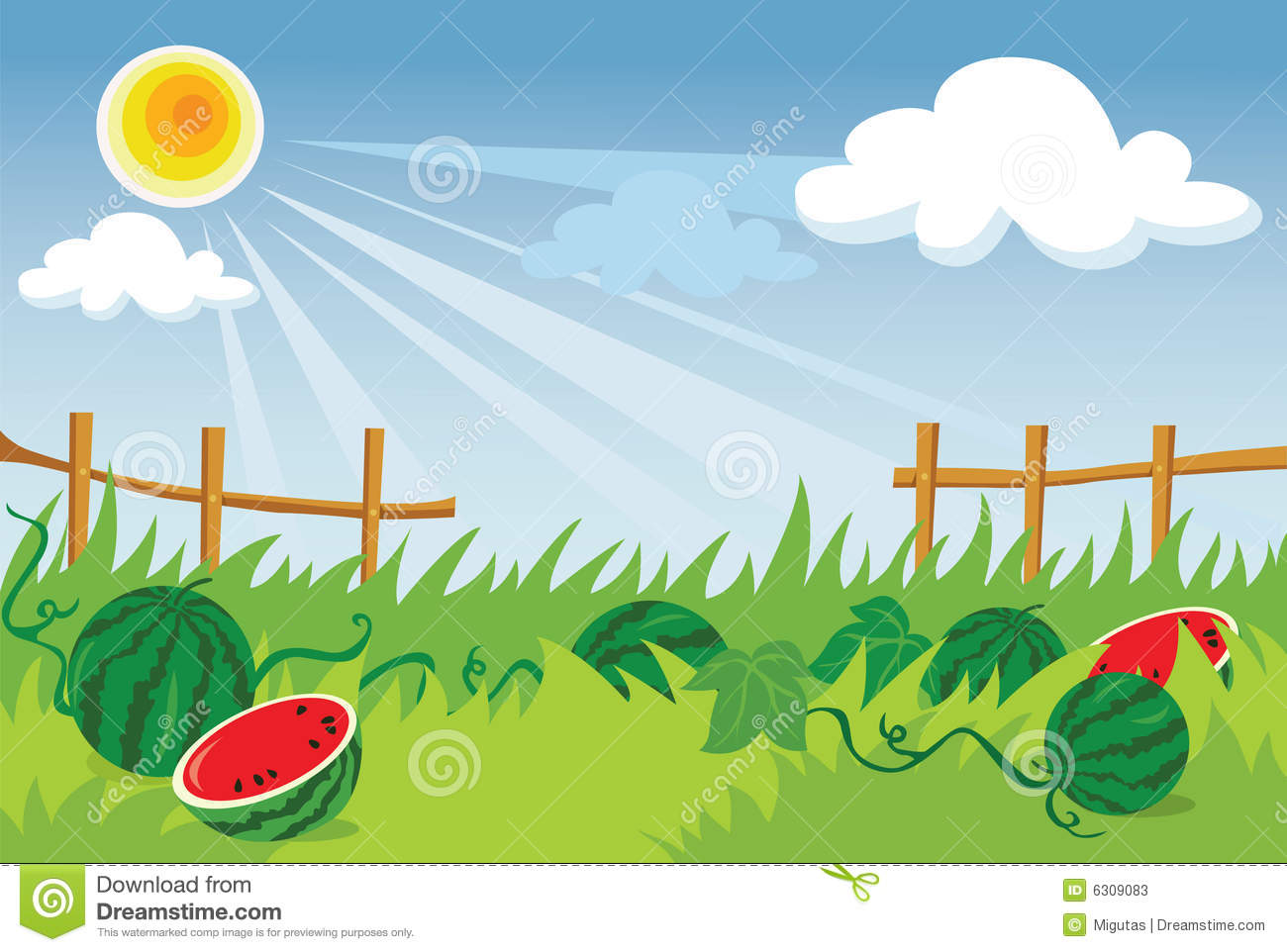 Watermelon plantation stock vector. Image of cloud, herb ...