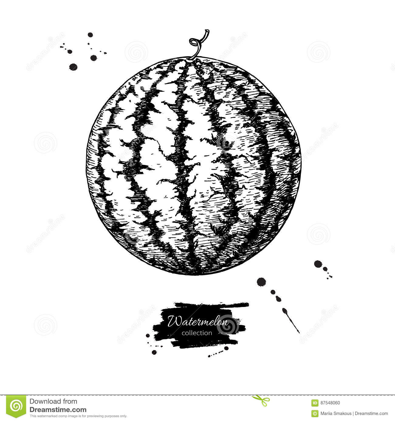 Watermelon vector drawing. hand drawn berry on white background.