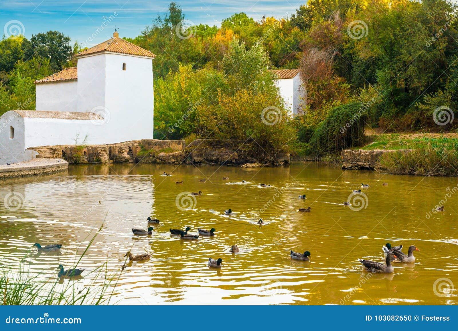 Watermill in alcala de guadaira stock foto afbeelding bestaande uit eenden landschap 103082650 - Piscina cubierta alcala de guadaira ...