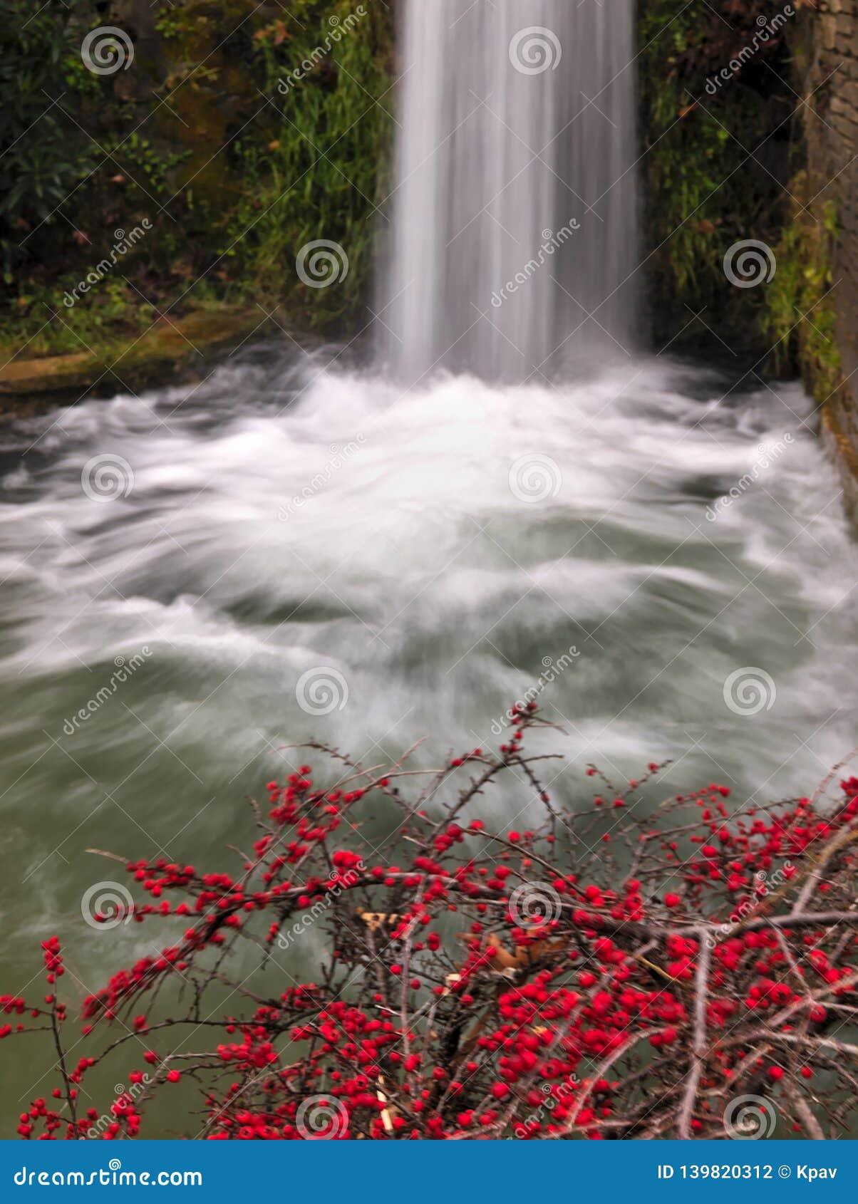 Waterval en installatie met rode kleine vruchten