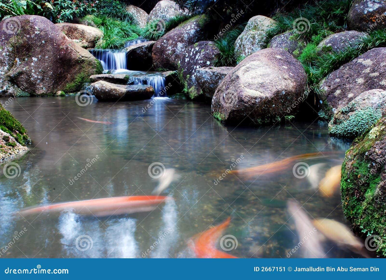 Waterval en landschappen