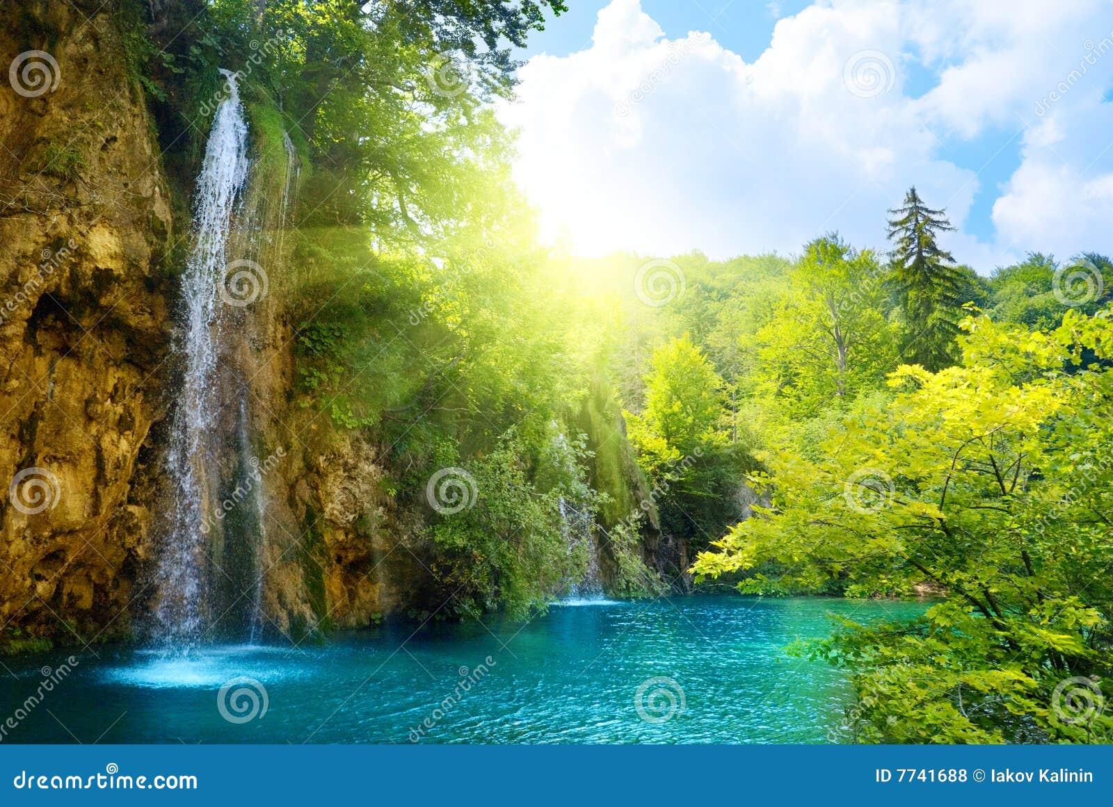 Watervallen in bos