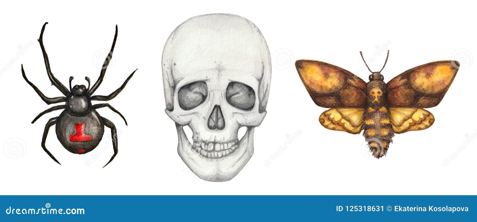 Waterverf gotische reeks met spin, schedel en mot