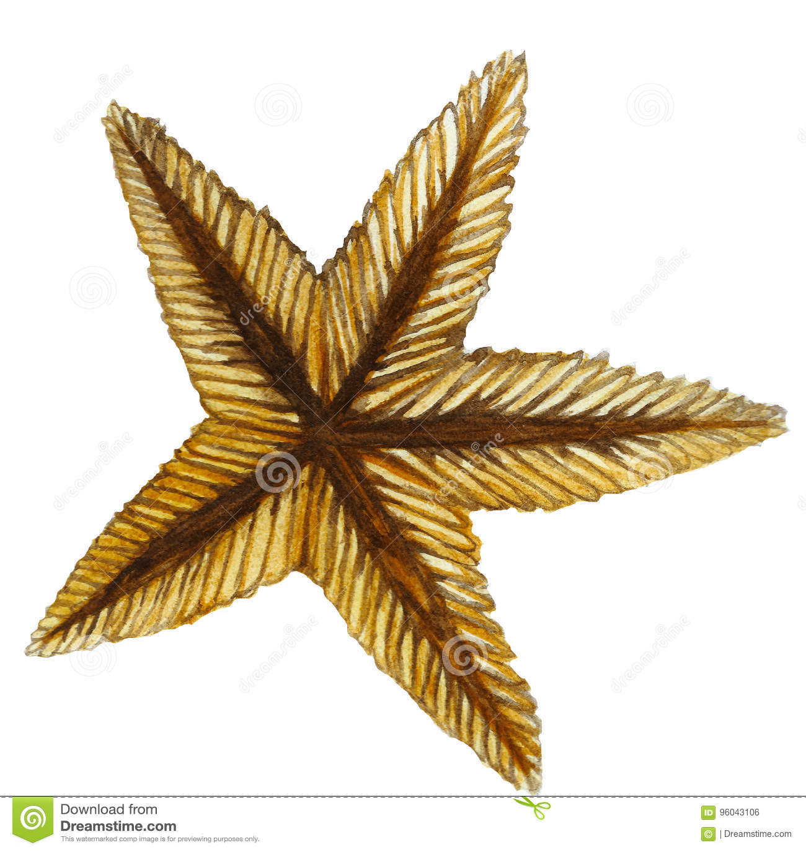 Waterverf het schilderen van zand-gekleurde overzeese ster versteende klasse van ongewervelden zoals stekelhuidigen