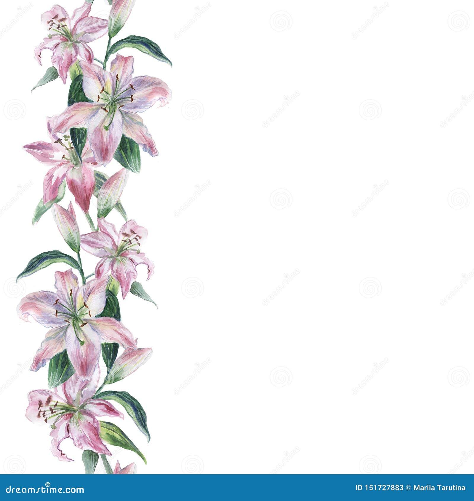 Waterverf naadloos patroon met witte en roze waterverf lilys op een witte achtergrond