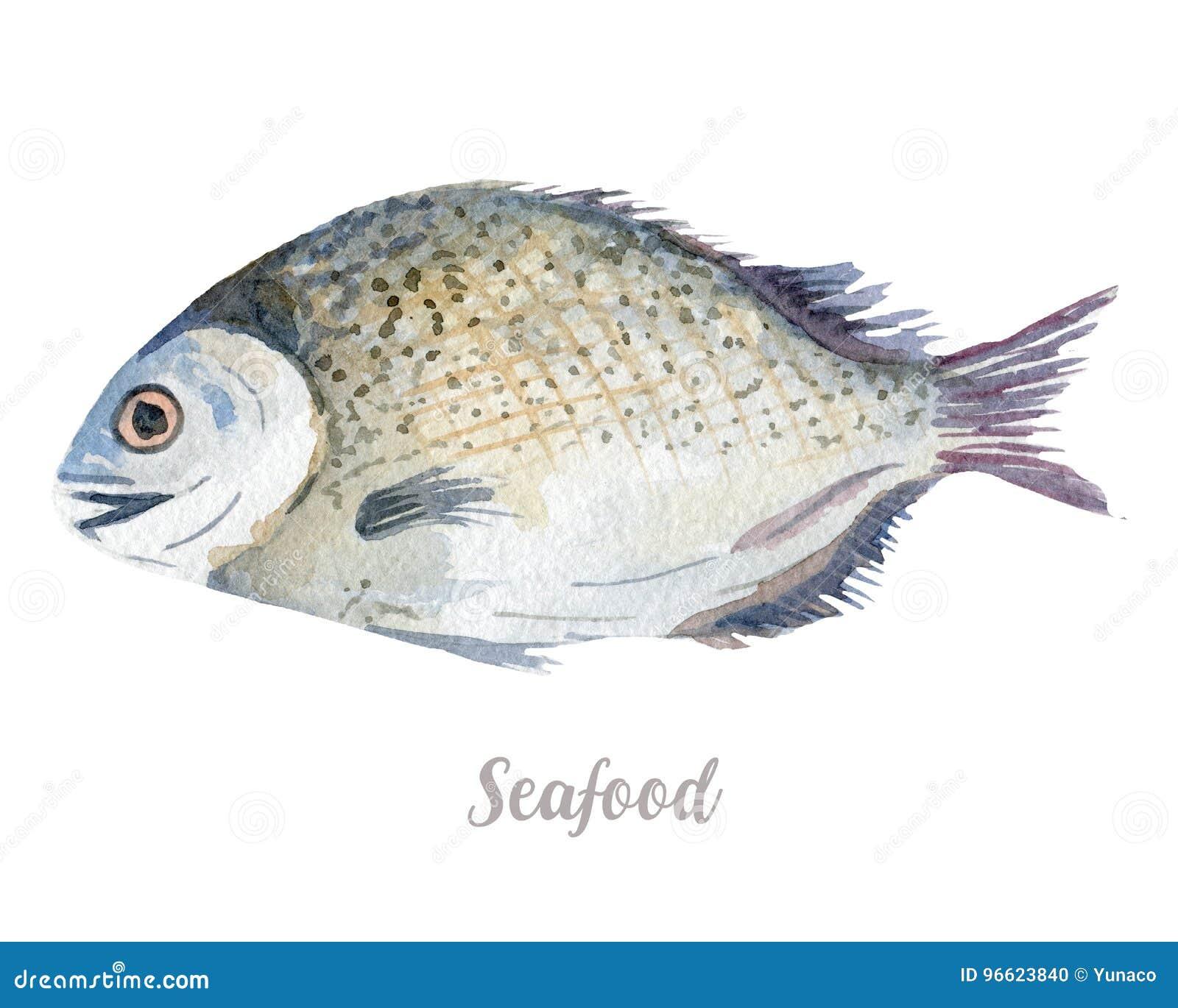 Waterverfhand getrokken vissen verse zeevruchtenillustratie op witte achtergrond