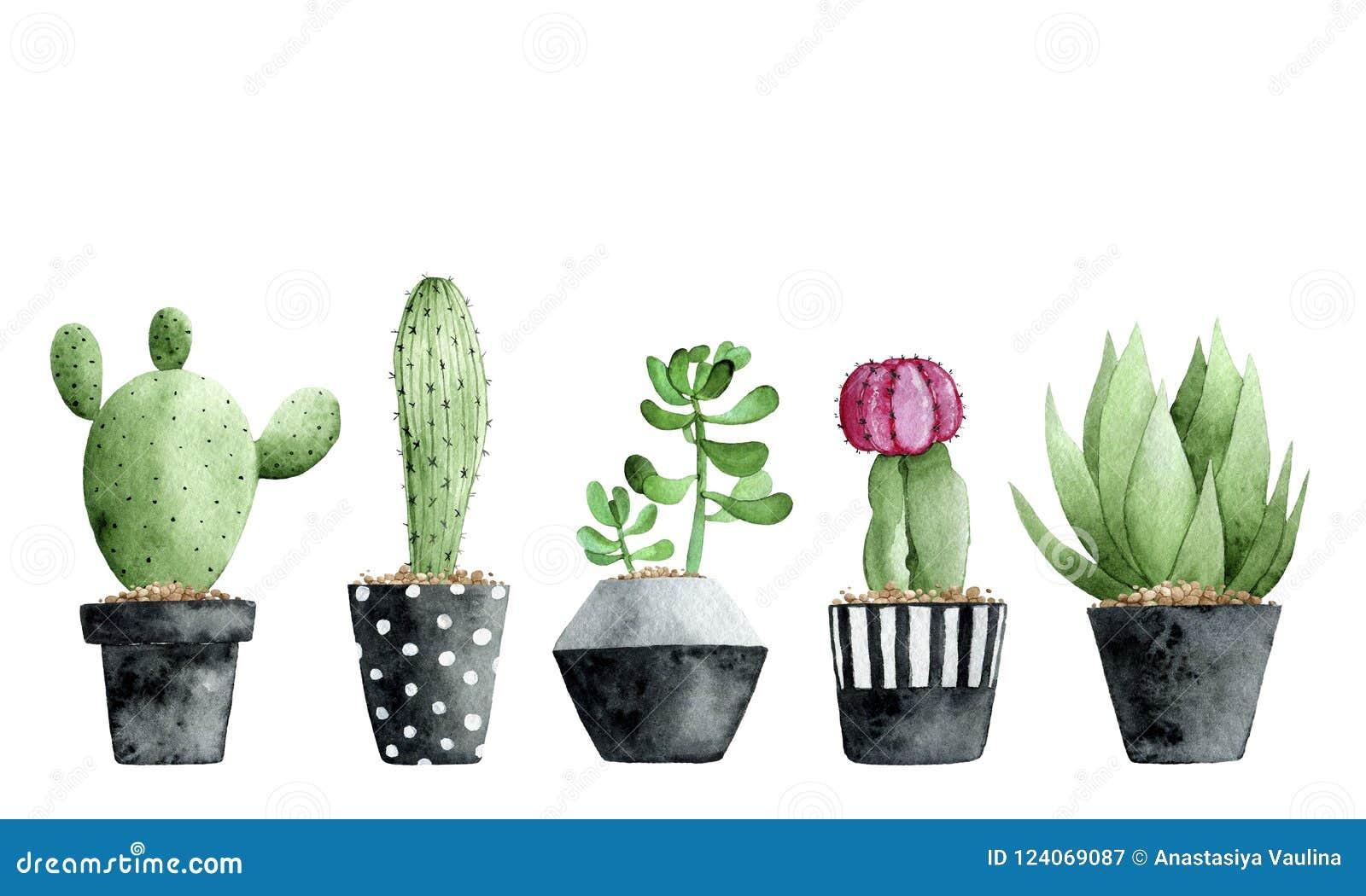 Waterverfinzameling met succulents en cactus op witte achtergrond