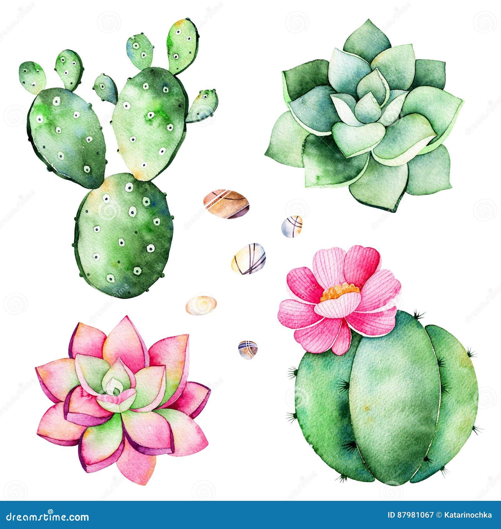 Waterverfinzameling met succulentsinstallaties, kiezelsteenstenen, cactus