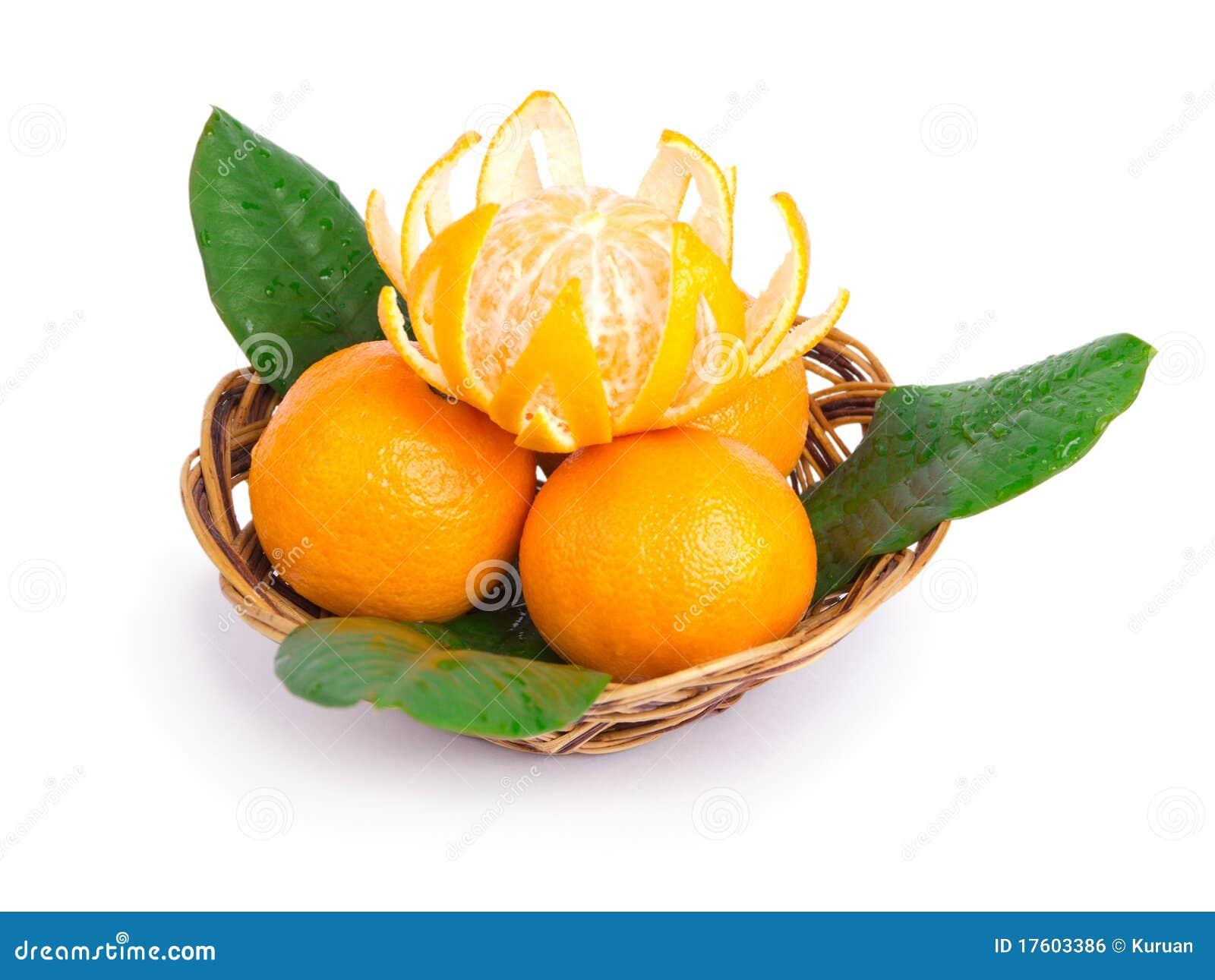 Wattled tangerines плиты