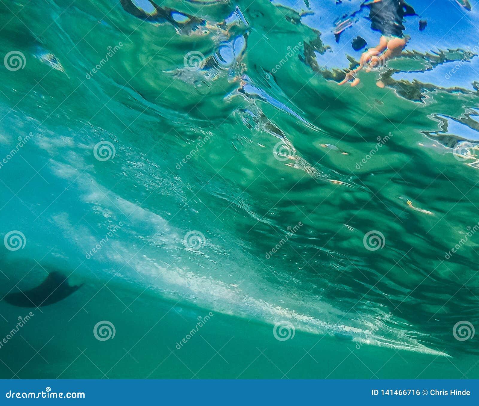 Wave praticante il surfing 7