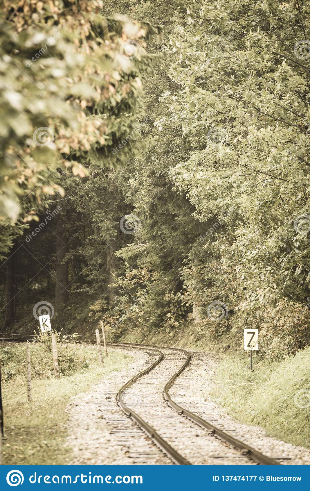 wavy log railway tracks in wet green forest with fresh meadows - vintage retro look