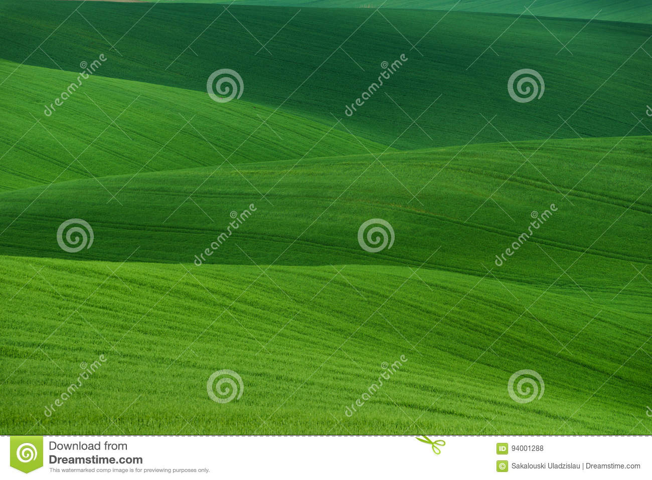 Wavy summer rural landscape in green color. Natural Green Background texture. Green moravian spring undulating fields of crops
