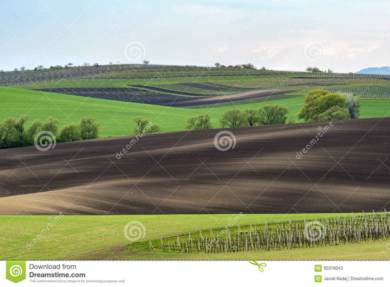 Wavy vineyard fields in the evening on South Moravia