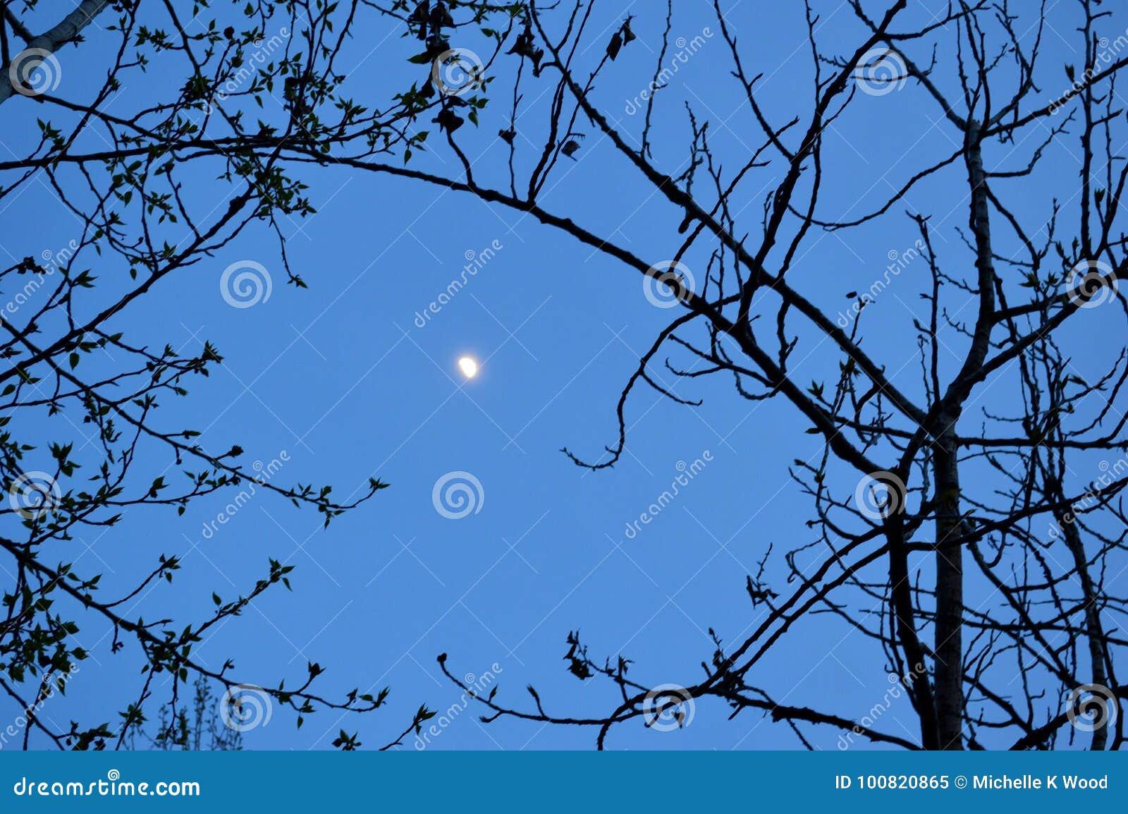 Waxing gibbous moon 2
