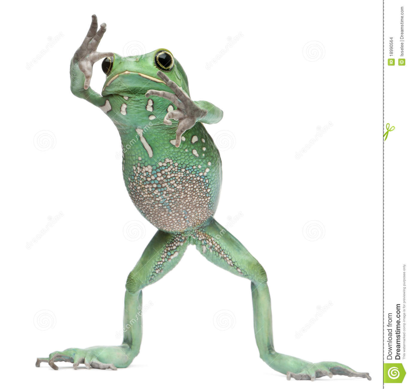 Waxy Tree Frog - Lessons - Tes Teach
