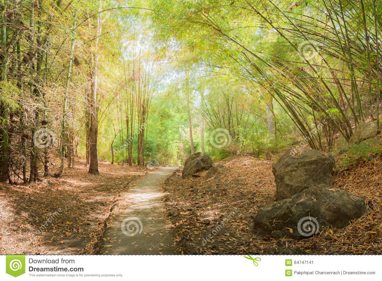 The way through the bamboo forest in autumn season. - (In the wi