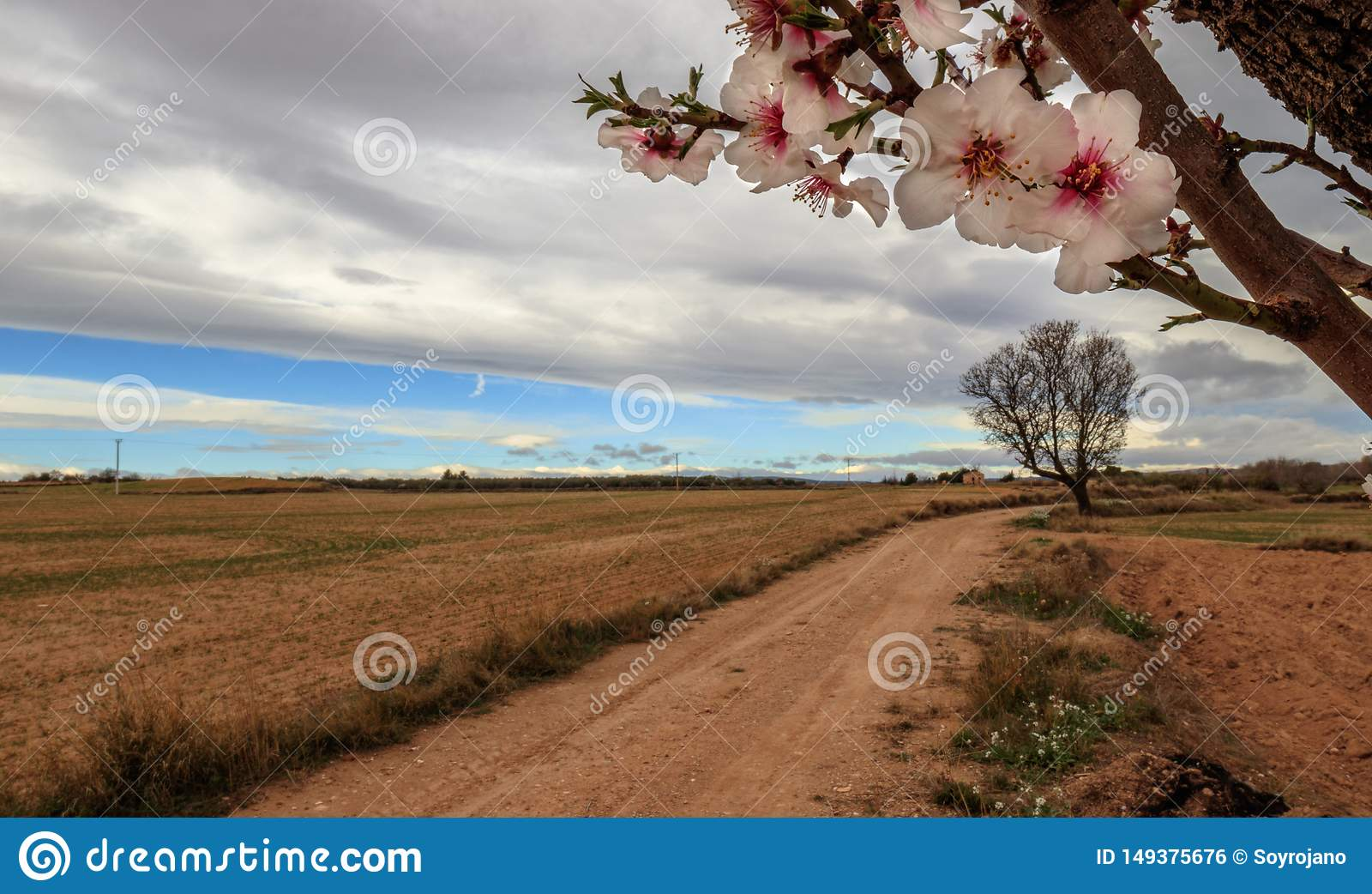 Almond flowers way