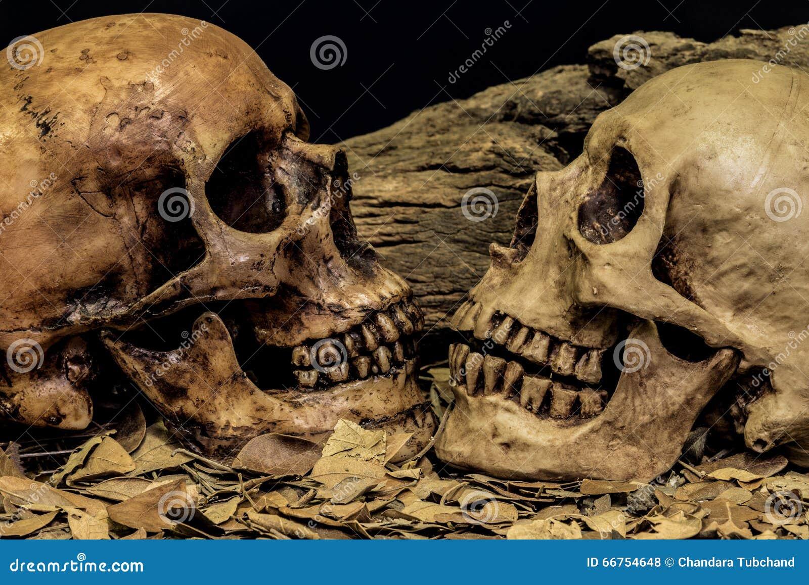 Wciąż życie pary czaszki sztuki abstrakta ludzki tło