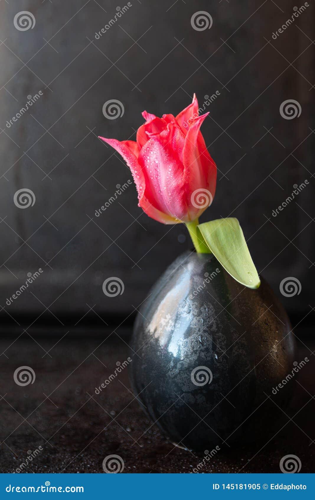 Wciąż życie z pojedynczym tulipanem w ciemnej wazie
