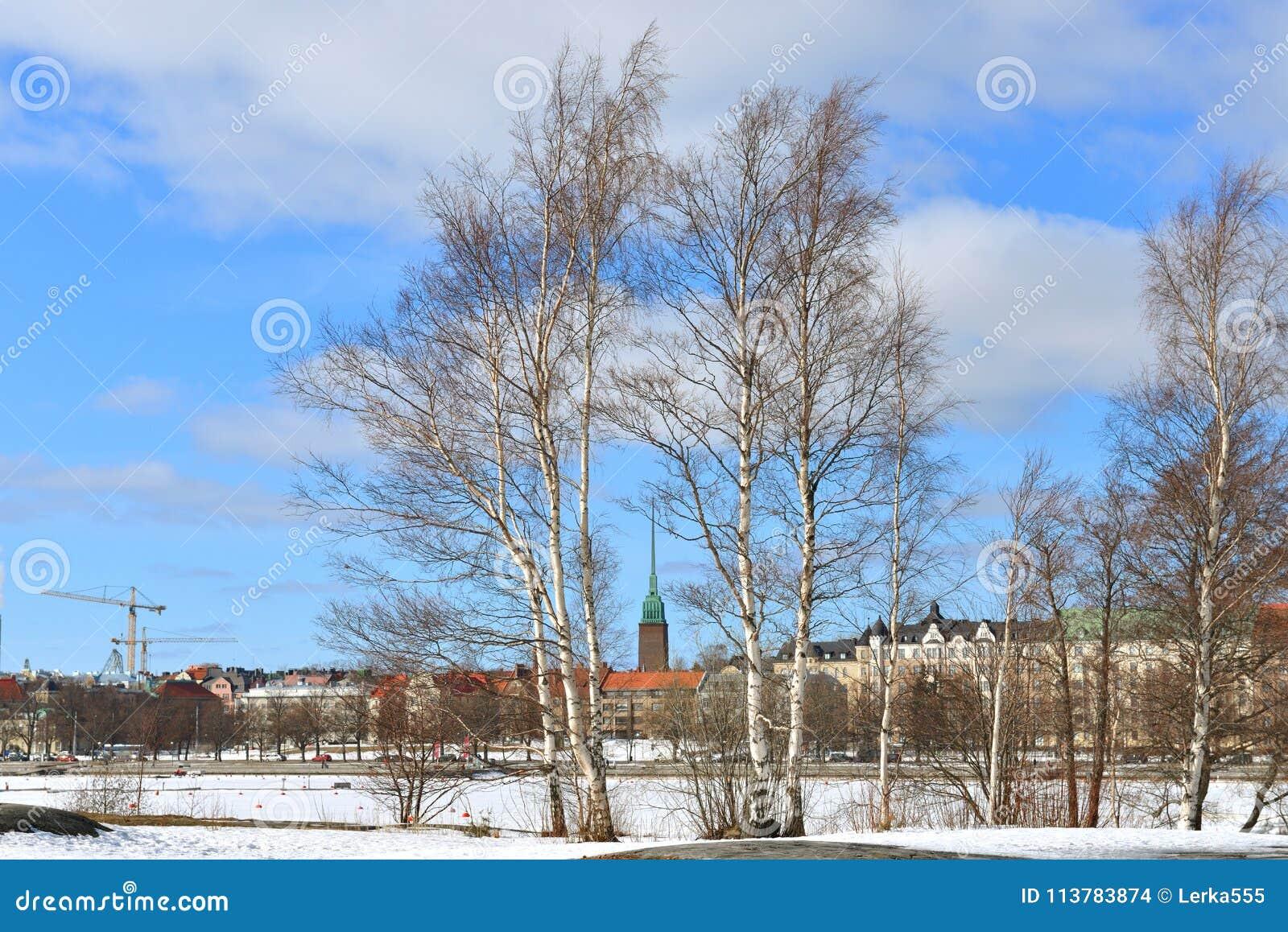 Wczesna wiosna w Helsinki Brzozy na Uunisaari wyspie