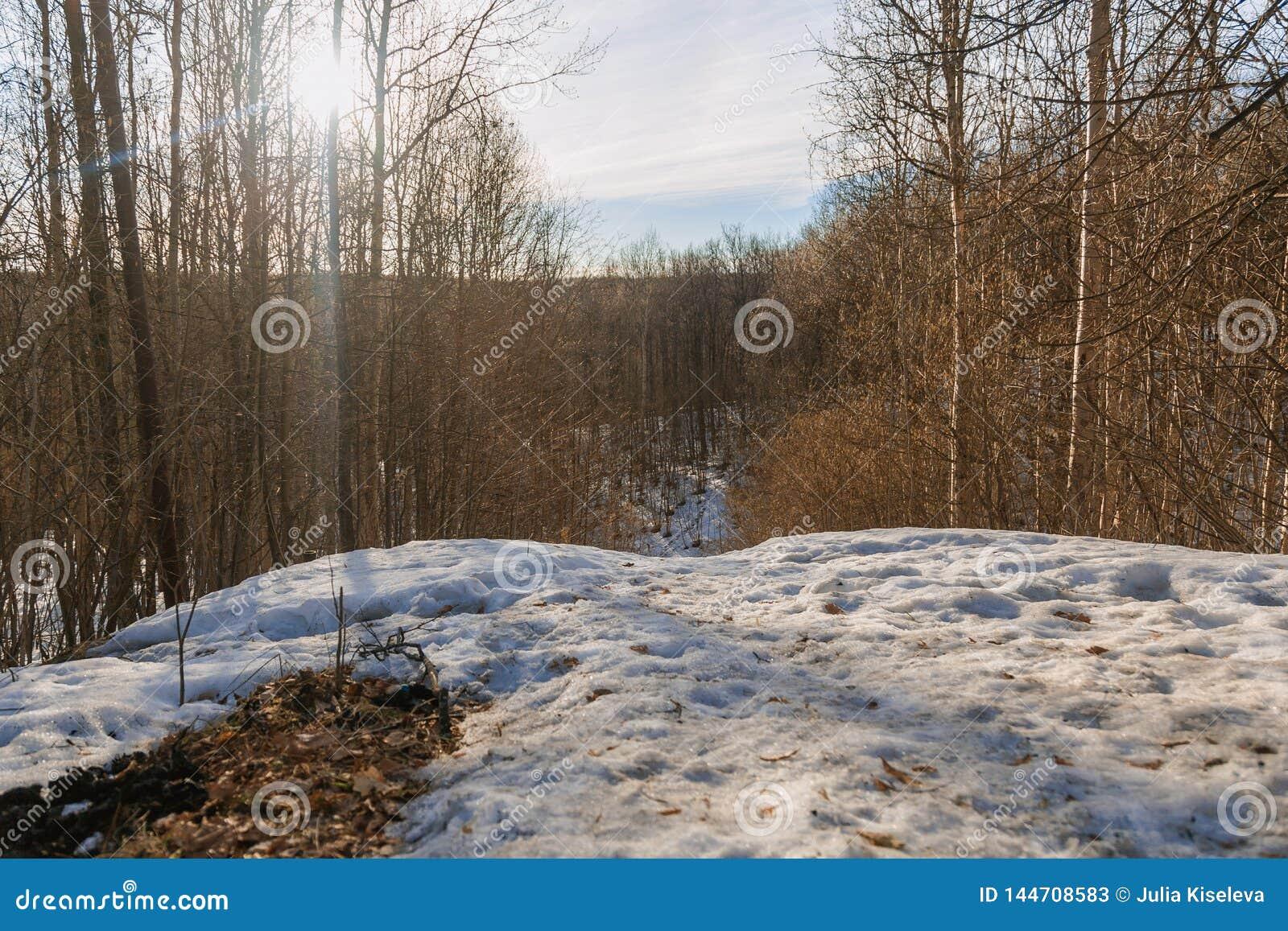 Wczesna wiosna w lesie