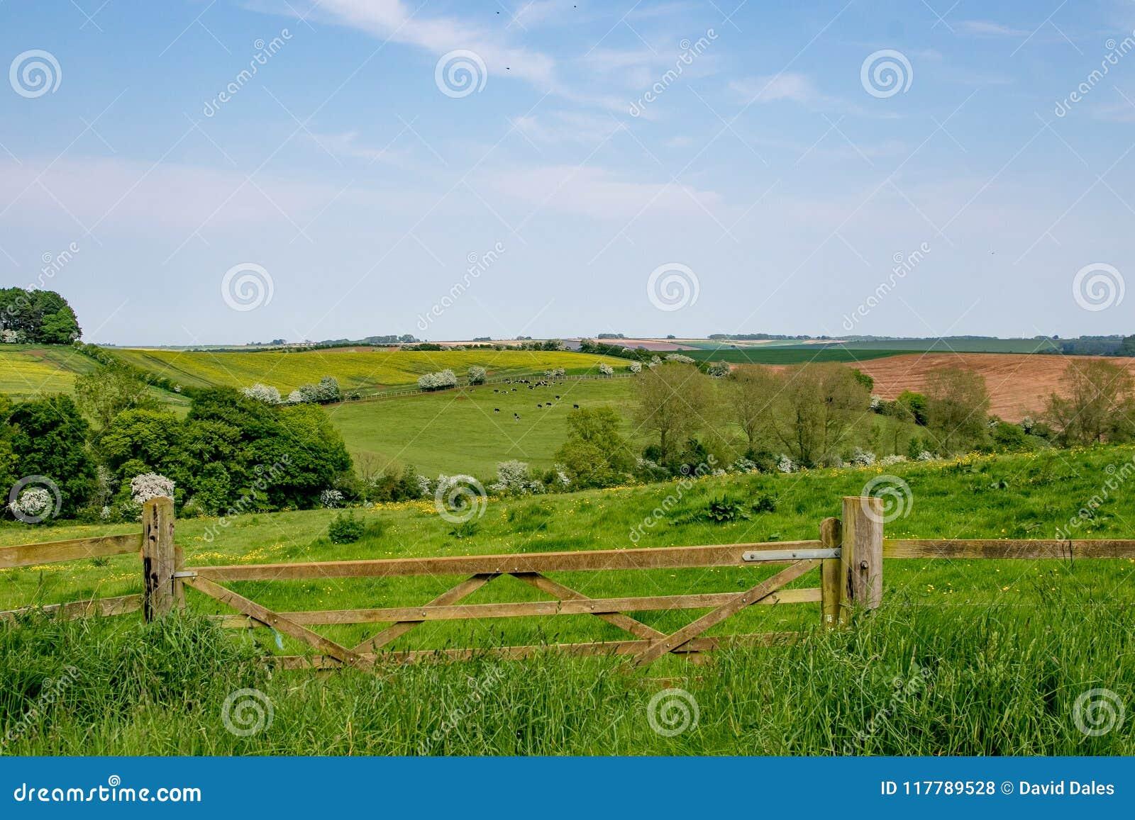 Wczesne lato widok toczna Angielska wieś