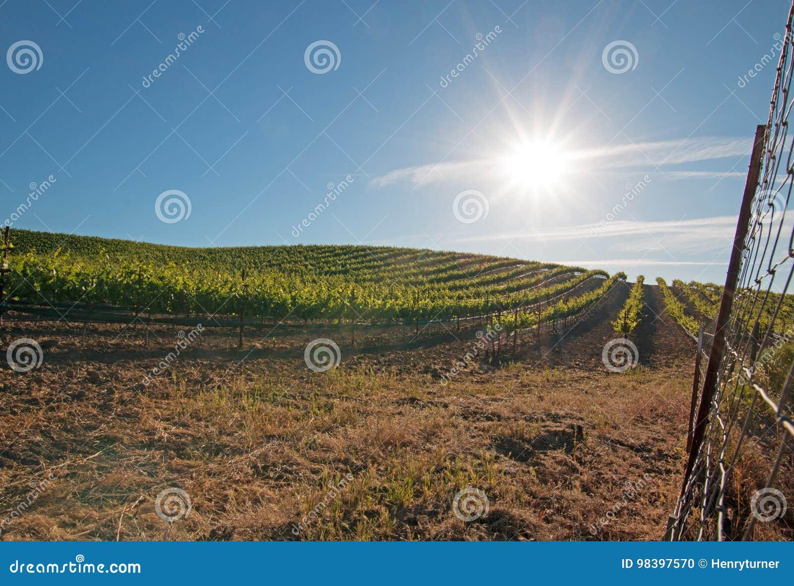 Wczesnego poranku słońca jaśnienie na Paso Robles winnicach w Środkowej dolinie Kalifornia usa