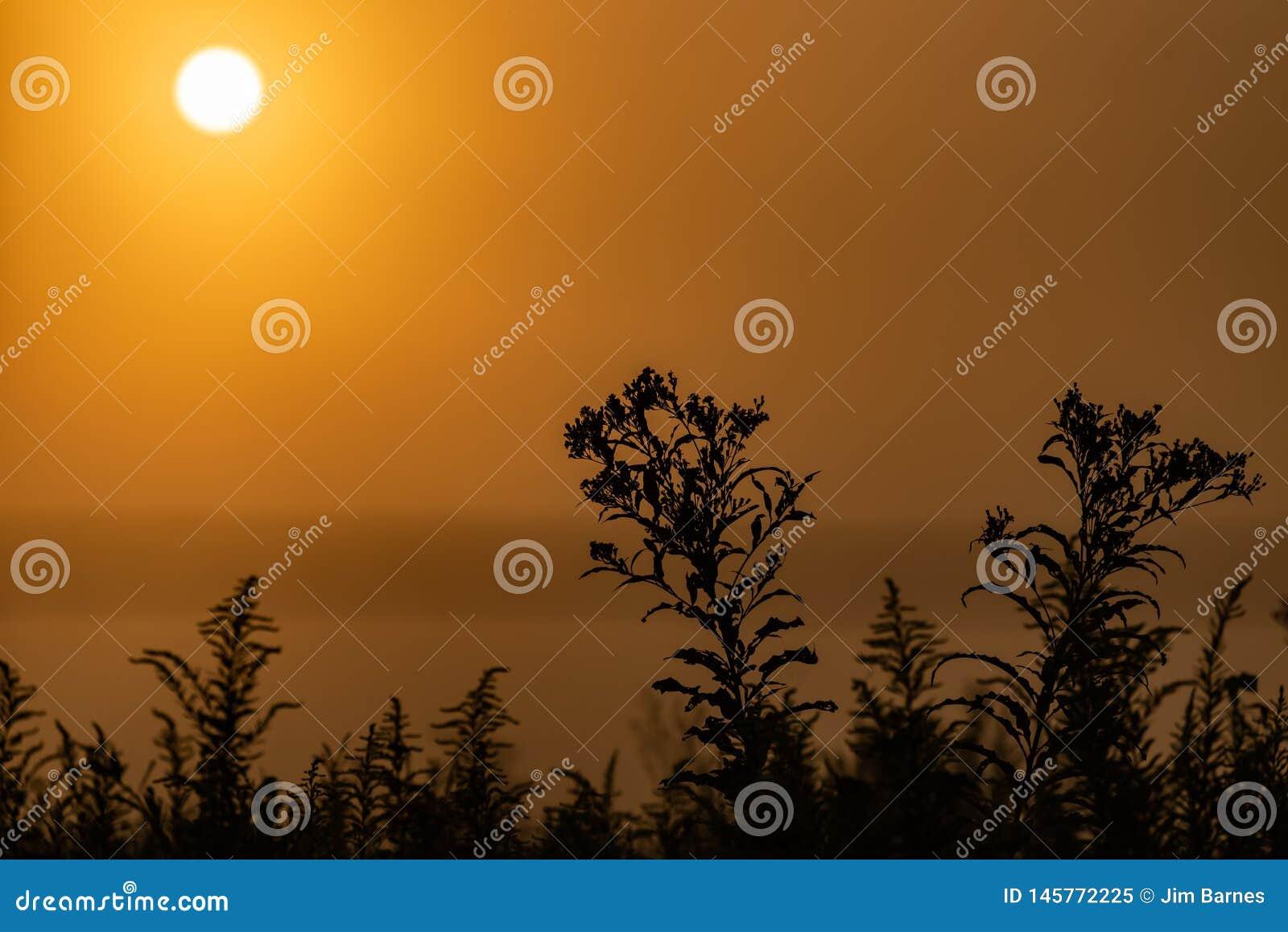 Wczesnego poranku wschód słońca z żółtymi niebami i sylwetką rośliny w przedpolu