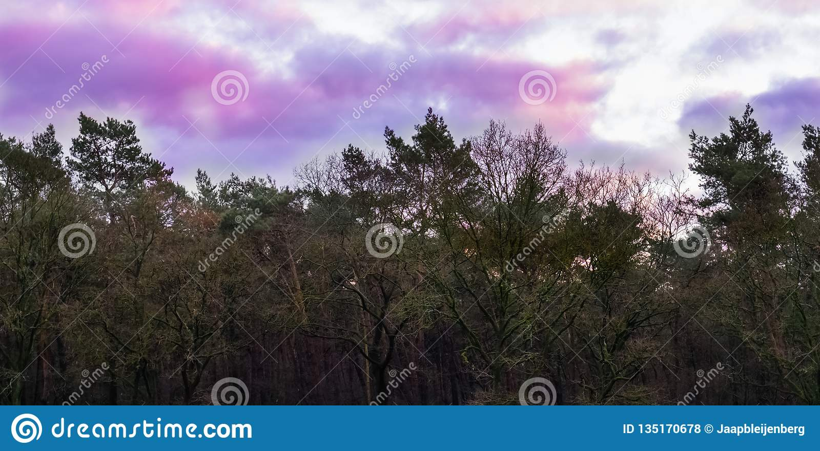 Weather phenomenon in the sky, pink and purple nacreous clouds, forest landscape background