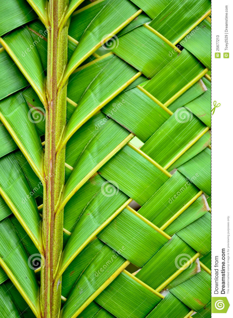 How To Weave A Coconut Leaf Basket : Weaving coconut leaves texture stock image