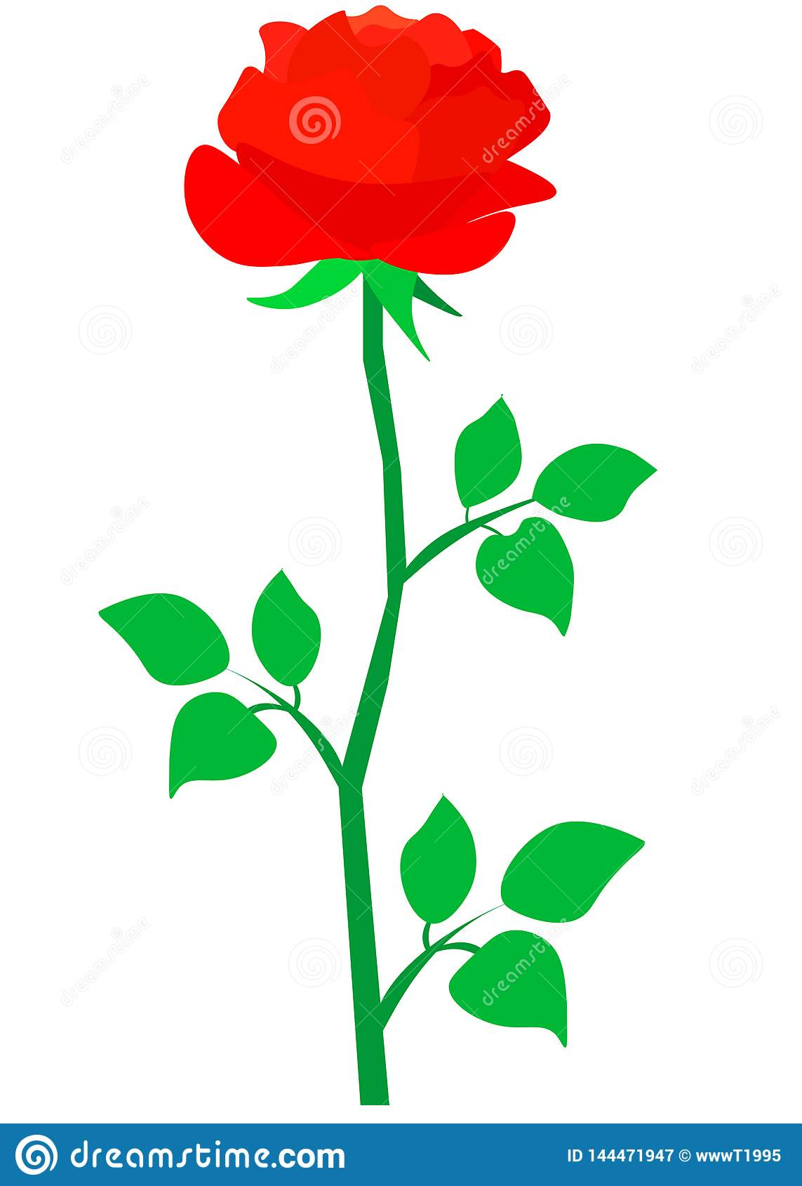 Web. Isolated vector big bud of fresh red rose with leaves on white background.