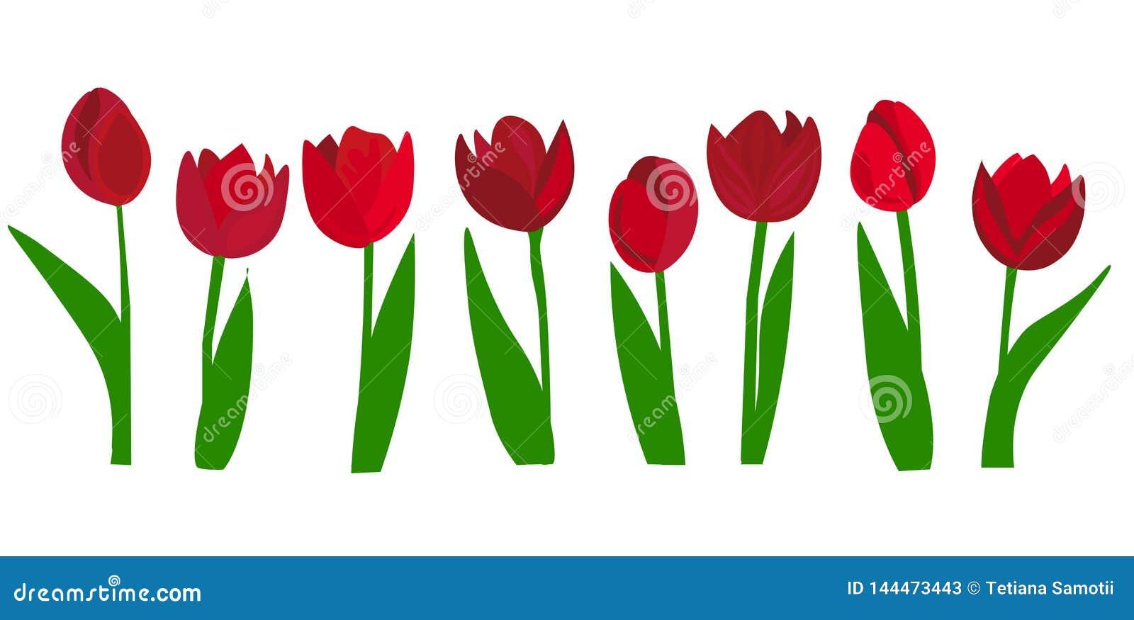 Web Blumenstrau? von bunten Tulpen im flachen Design Auch im corel abgehobenen Betrag Blumenstrau? von Tulpen, lokalisiert auf we