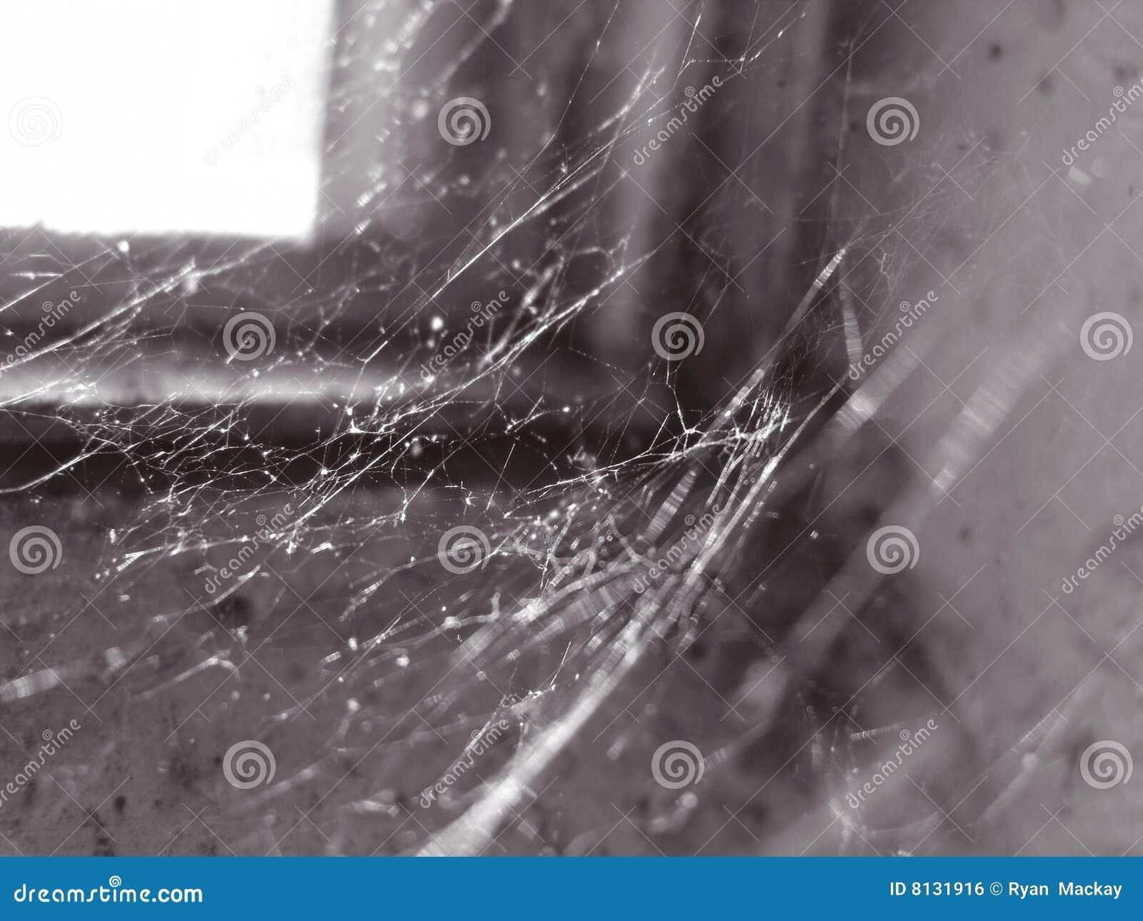 Web d épi