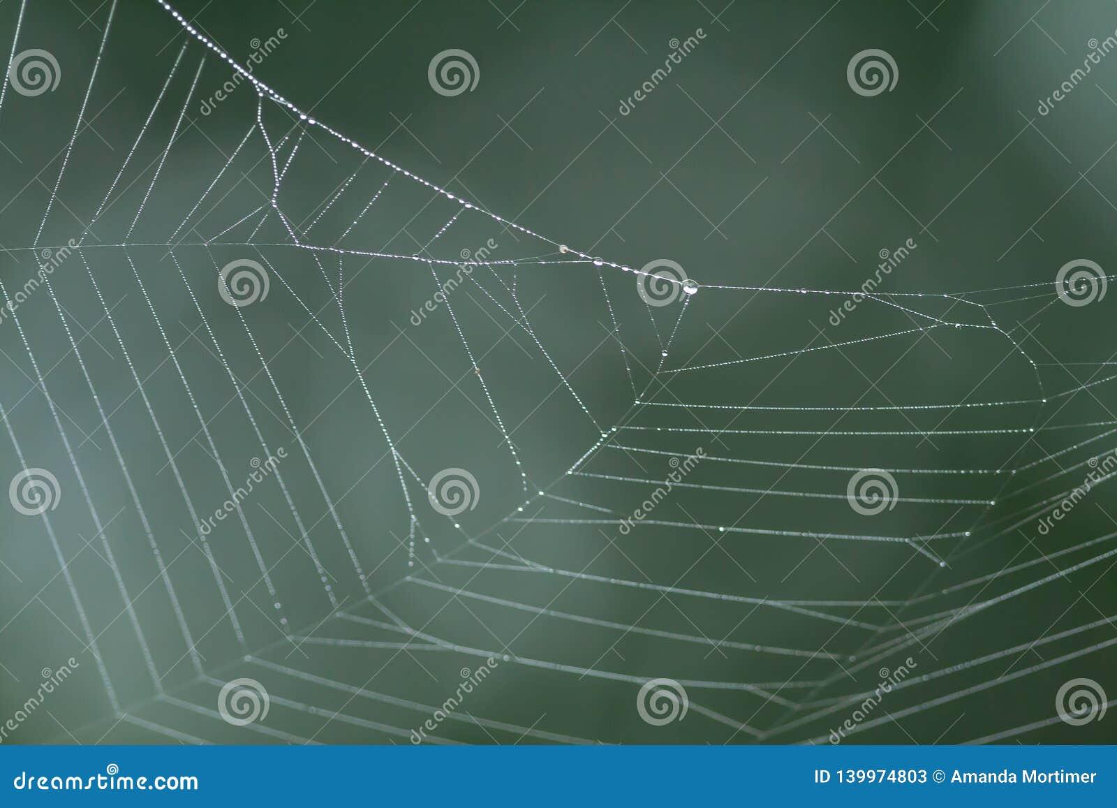 Web de araña con gotas de lluvia