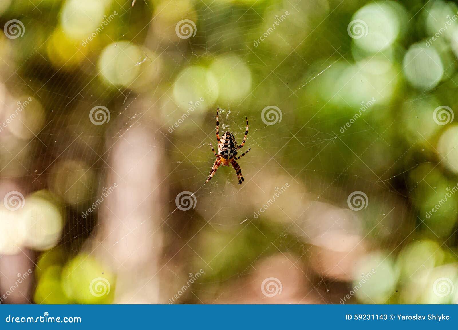 Download Web de araña de la caza imagen de archivo. Imagen de gota - 59231143