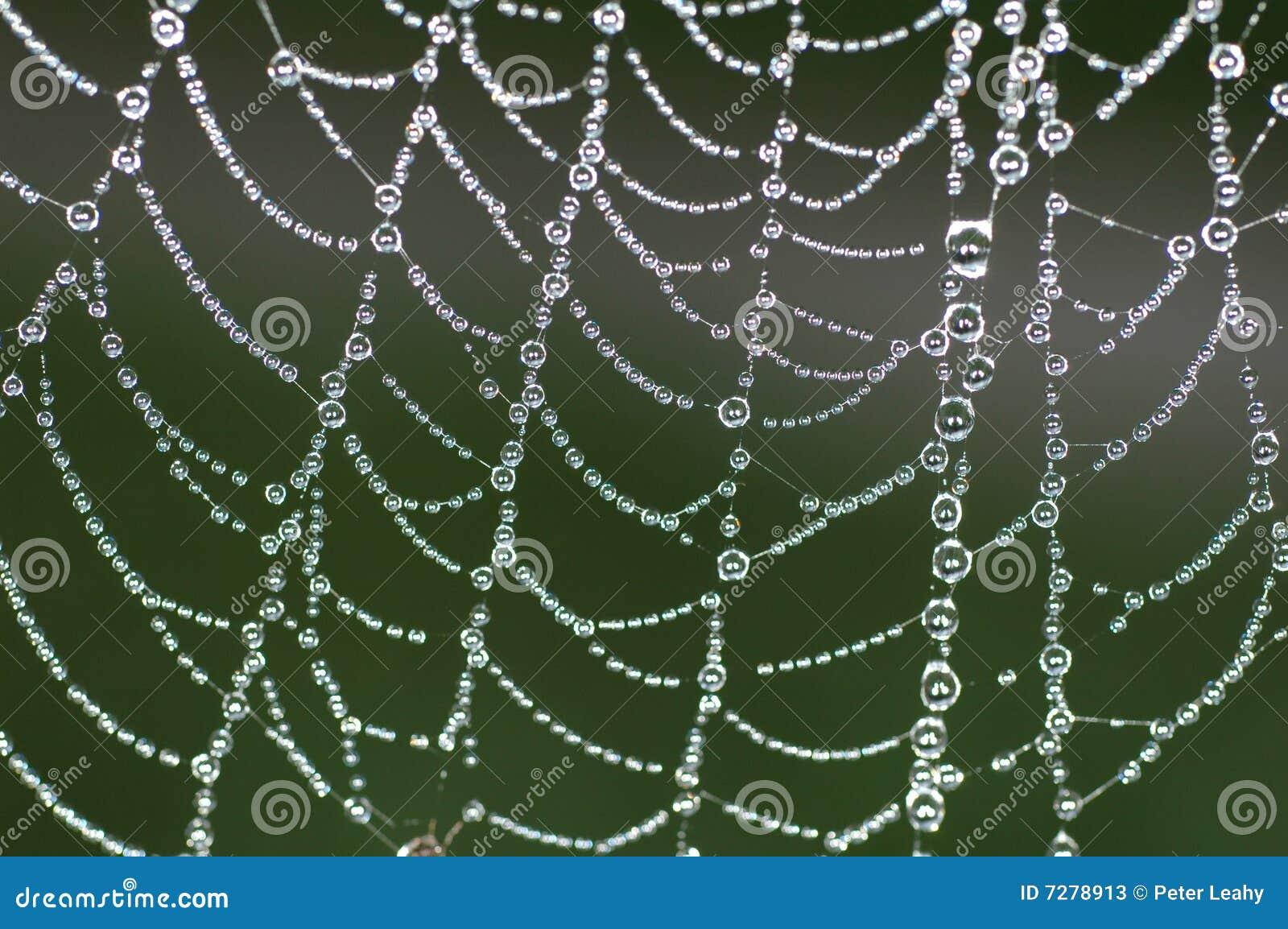 Web de arañas