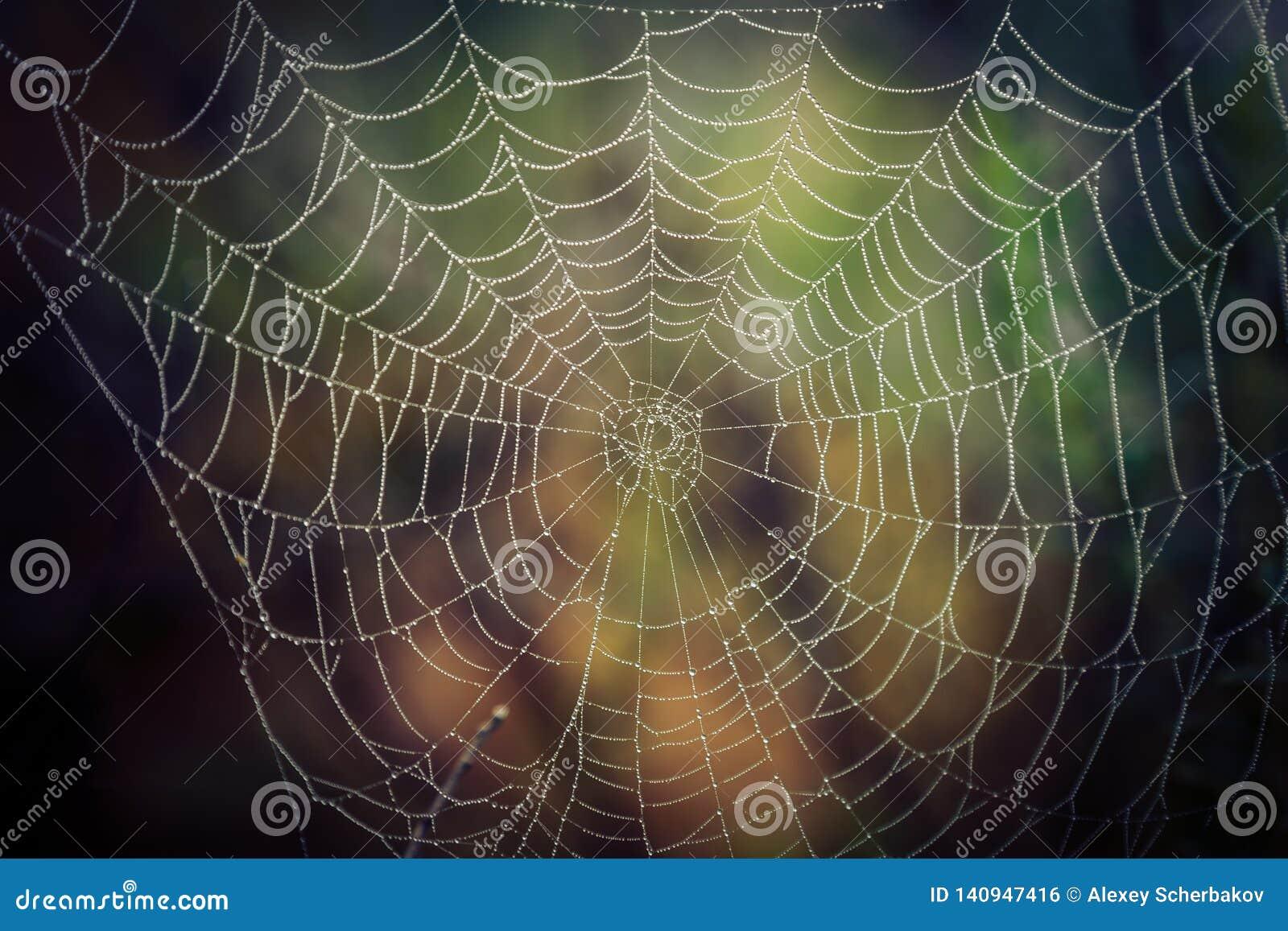 Web de aranha com gotas da água