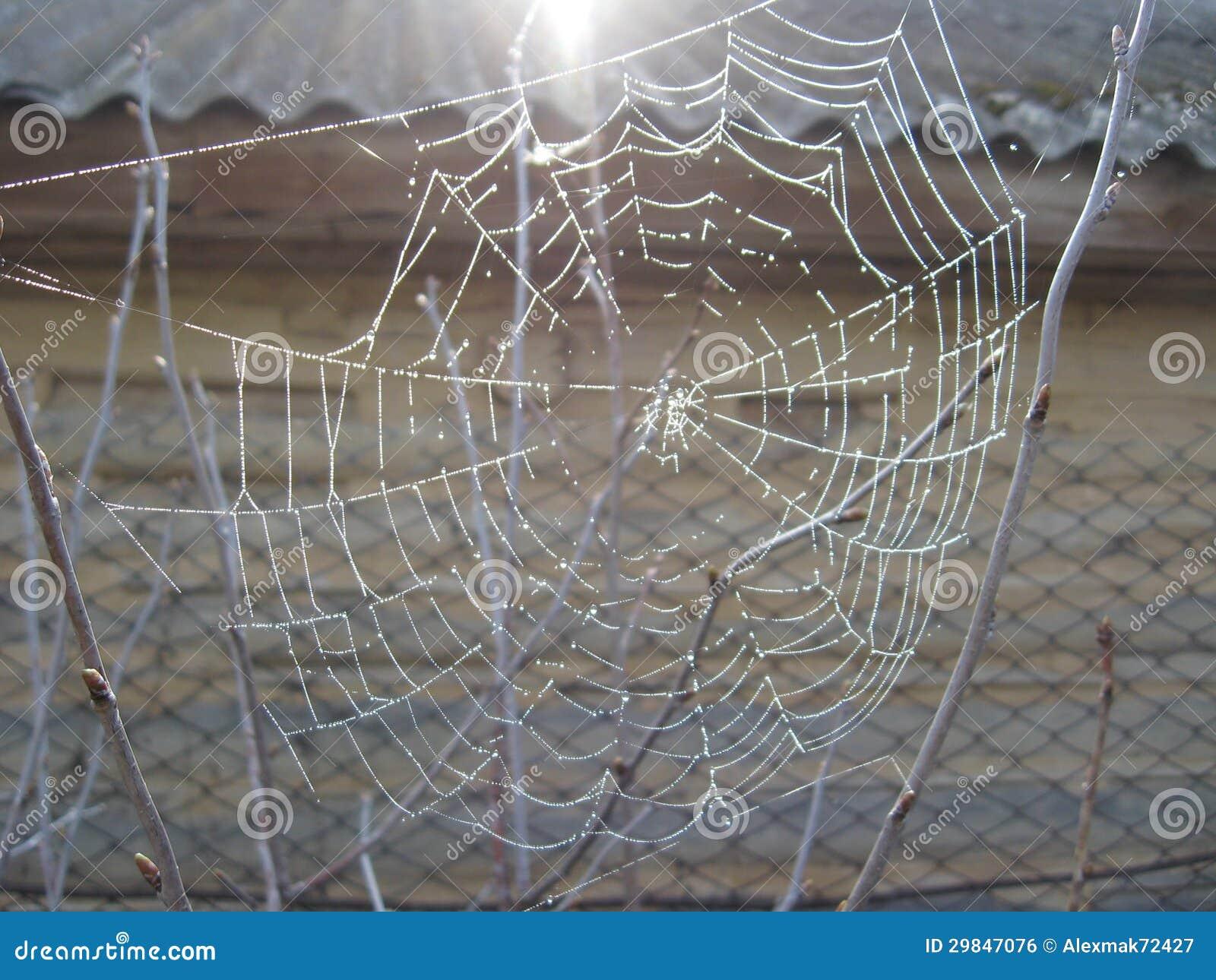 A Web de aranha com orvalho